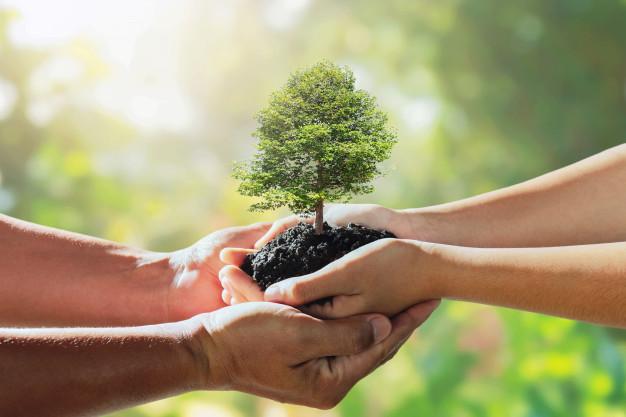 um adulto segura mão de uma criança que uma pequena árvore